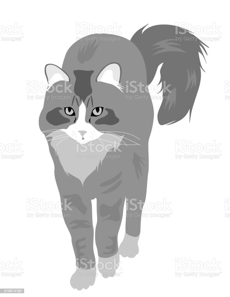 Cat Walk vector art illustration