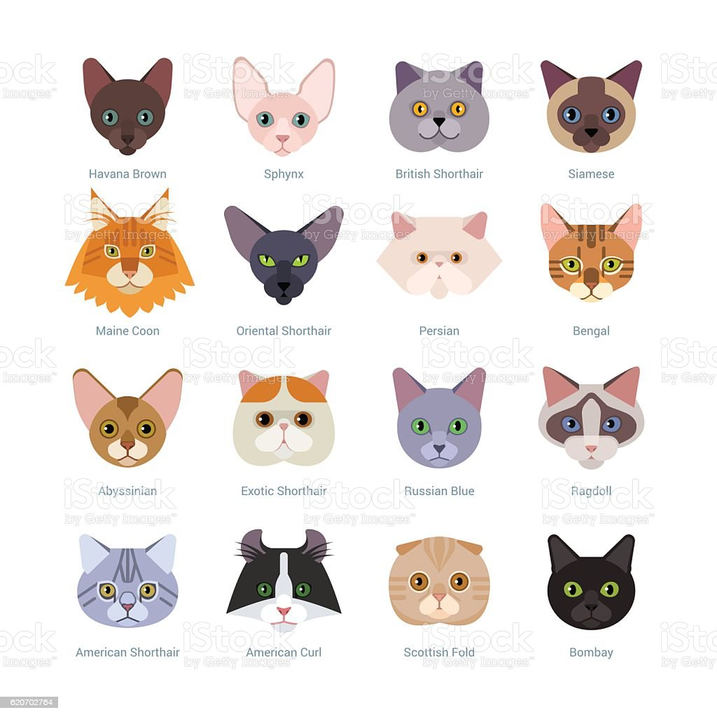 Cats faces collection vector art illustration