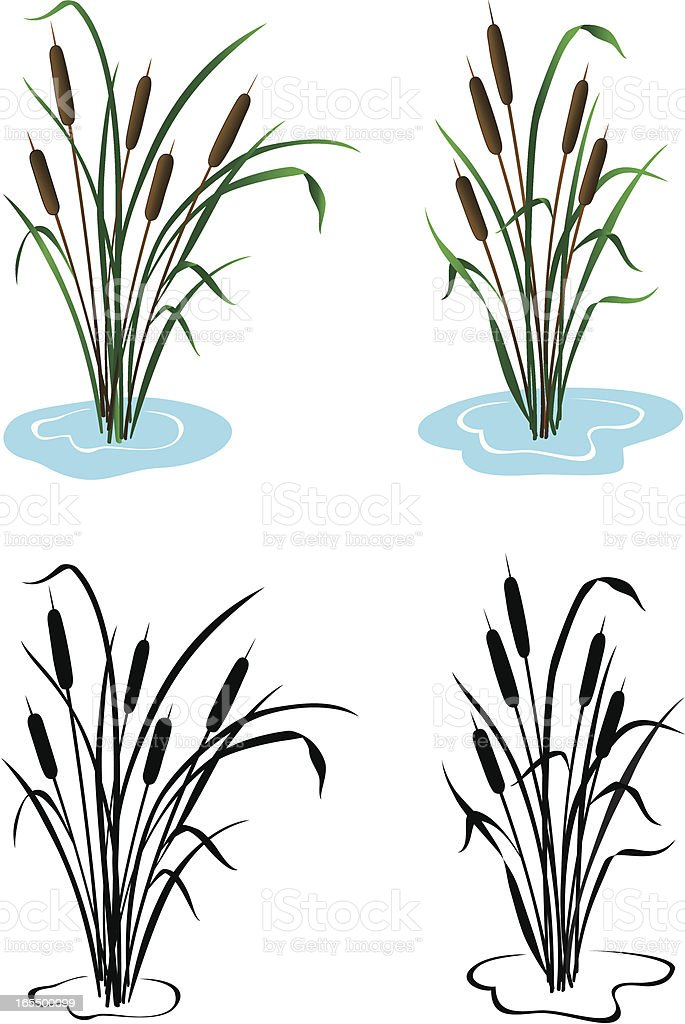 Cattails royalty-free stock vector art