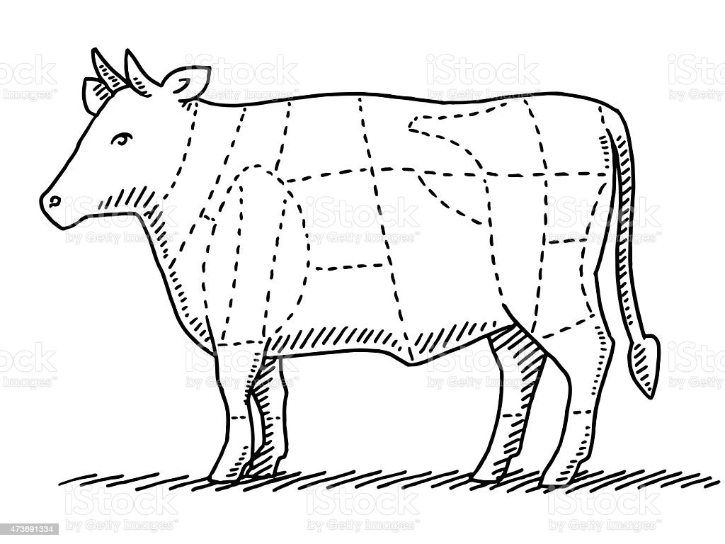 Cattle Beef Meat Parts Chart Drawing vector art illustration
