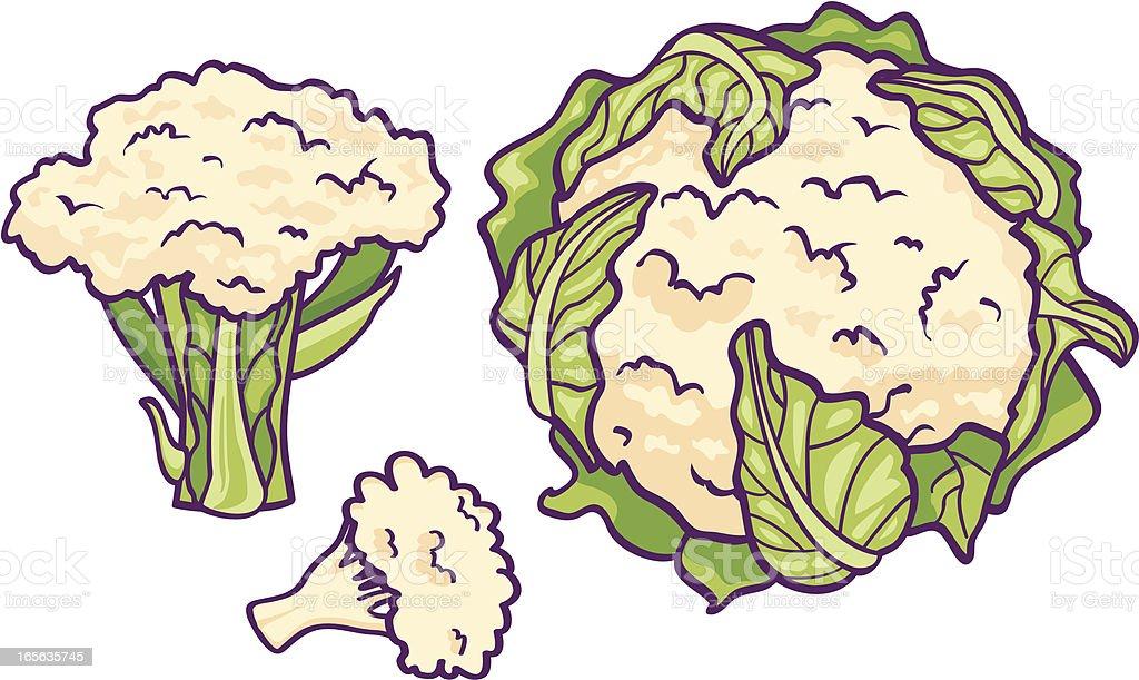 Cauliflower vector art illustration