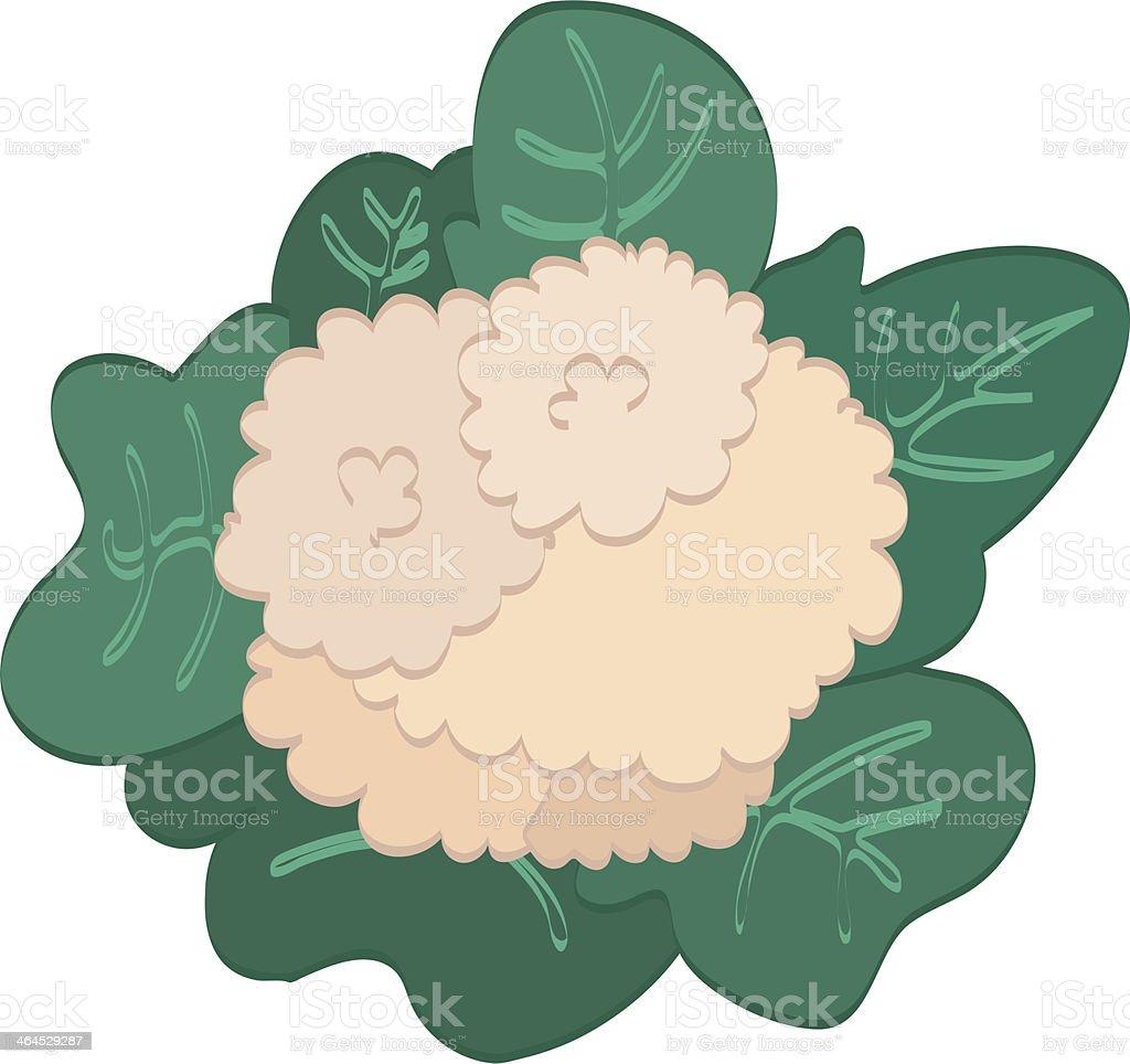 Cauliflower royalty-free stock vector art