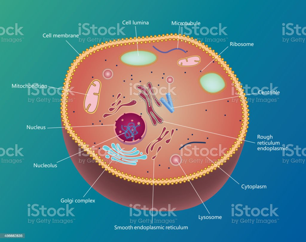 Cell vector art illustration