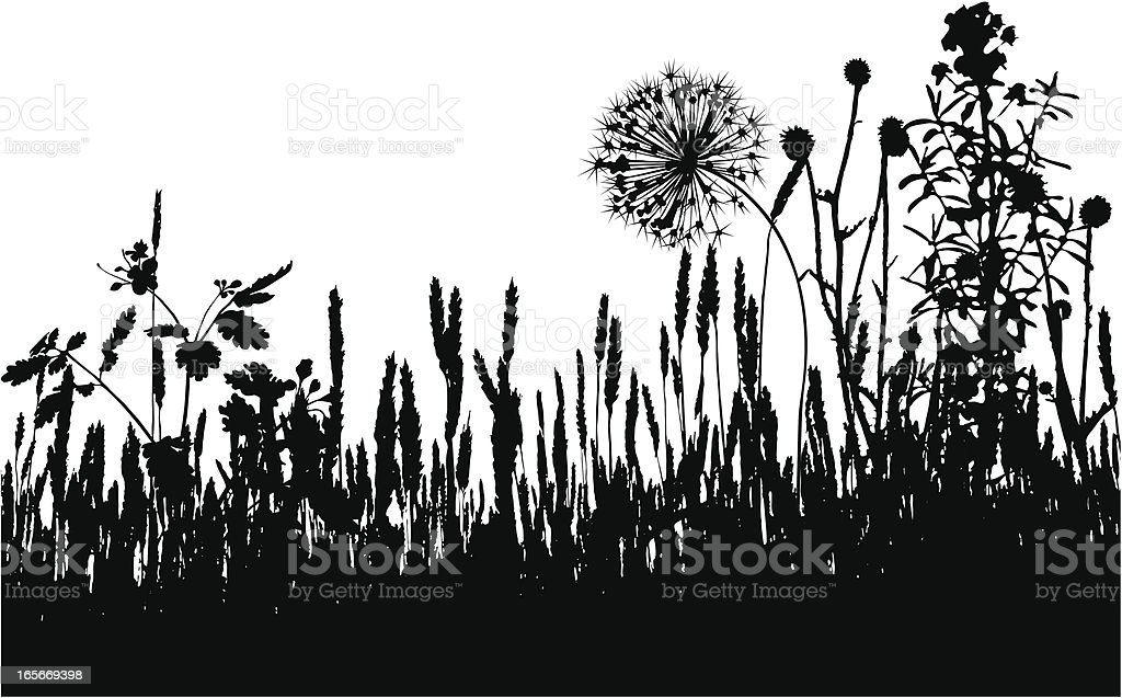 Cereal field royalty-free stock vector art
