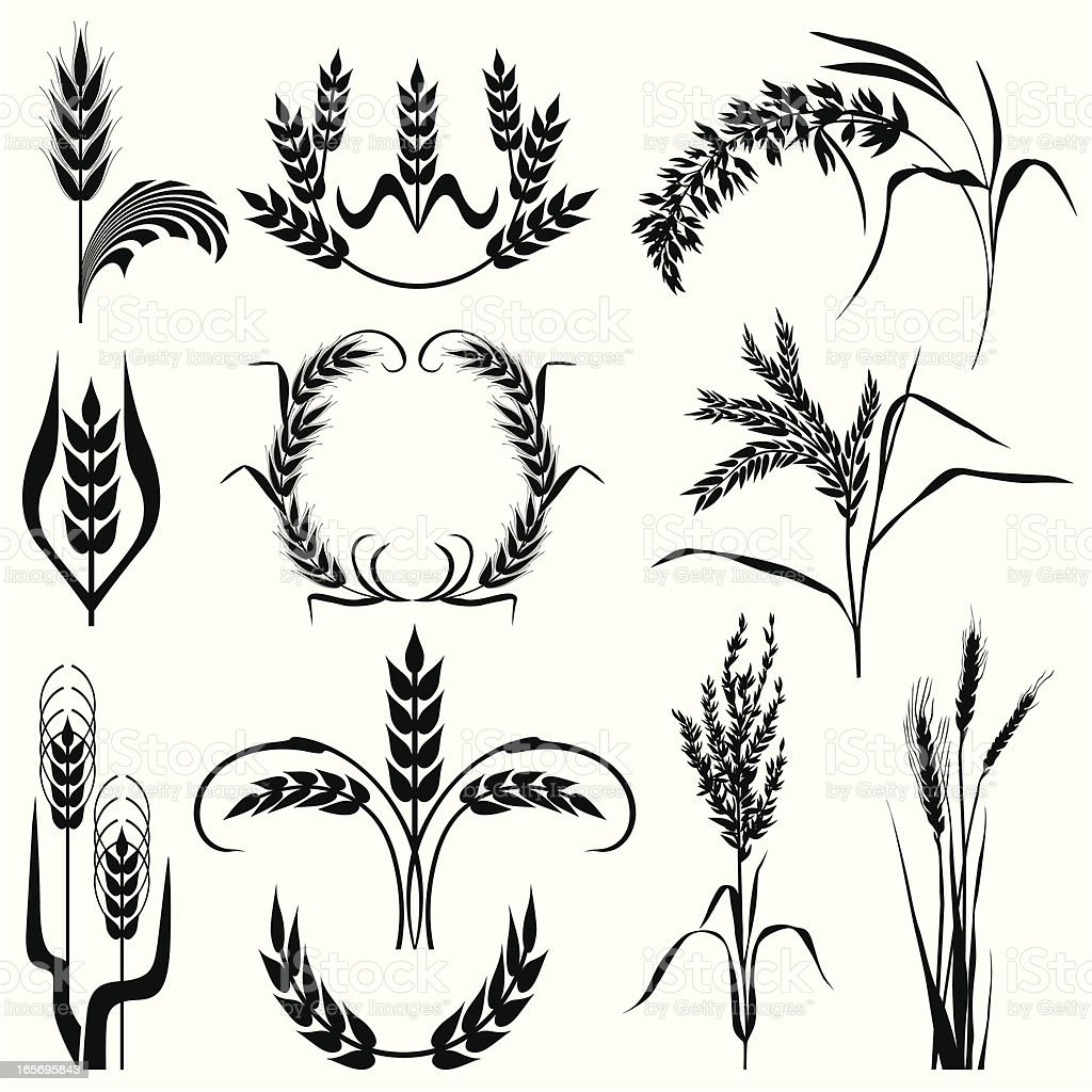 Cereal plant collection vector art illustration