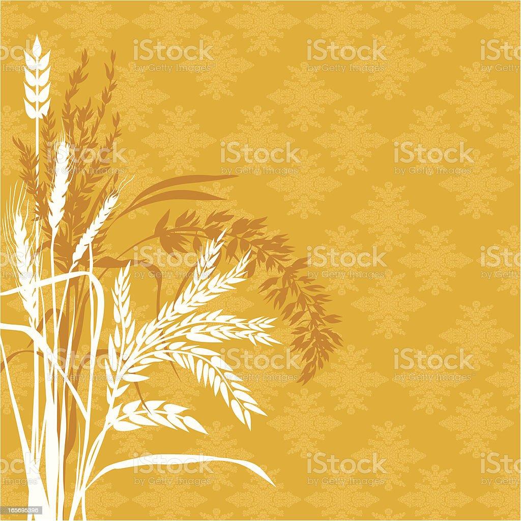 Cereal plants background vector art illustration