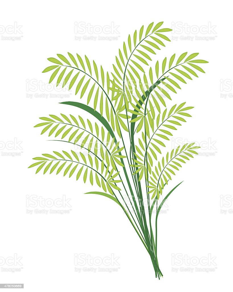Cereal Plants or Ferns Leaves on White Background royalty-free stock vector art