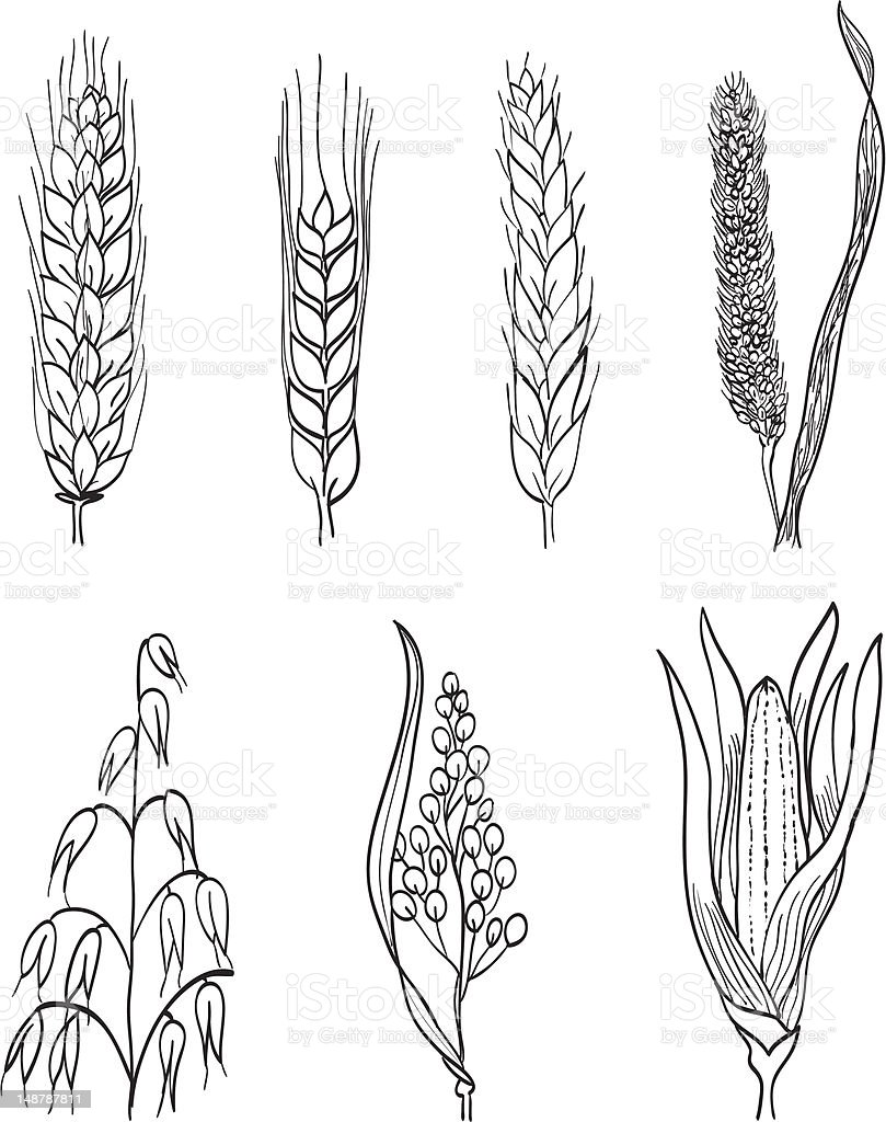 Cereals hand-drawn illustration royalty-free stock vector art