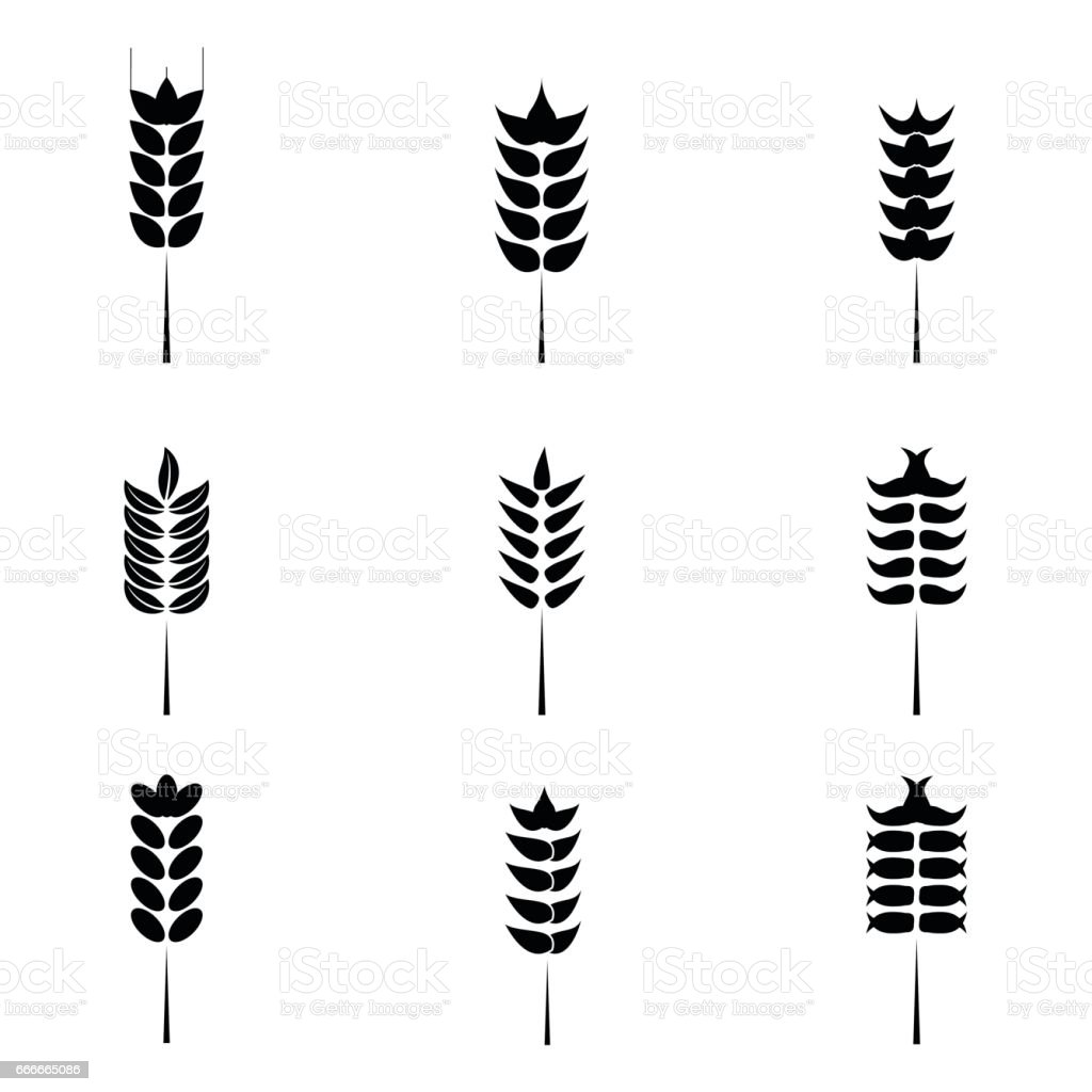 Cereals icon set with rice, wheat. vector art illustration