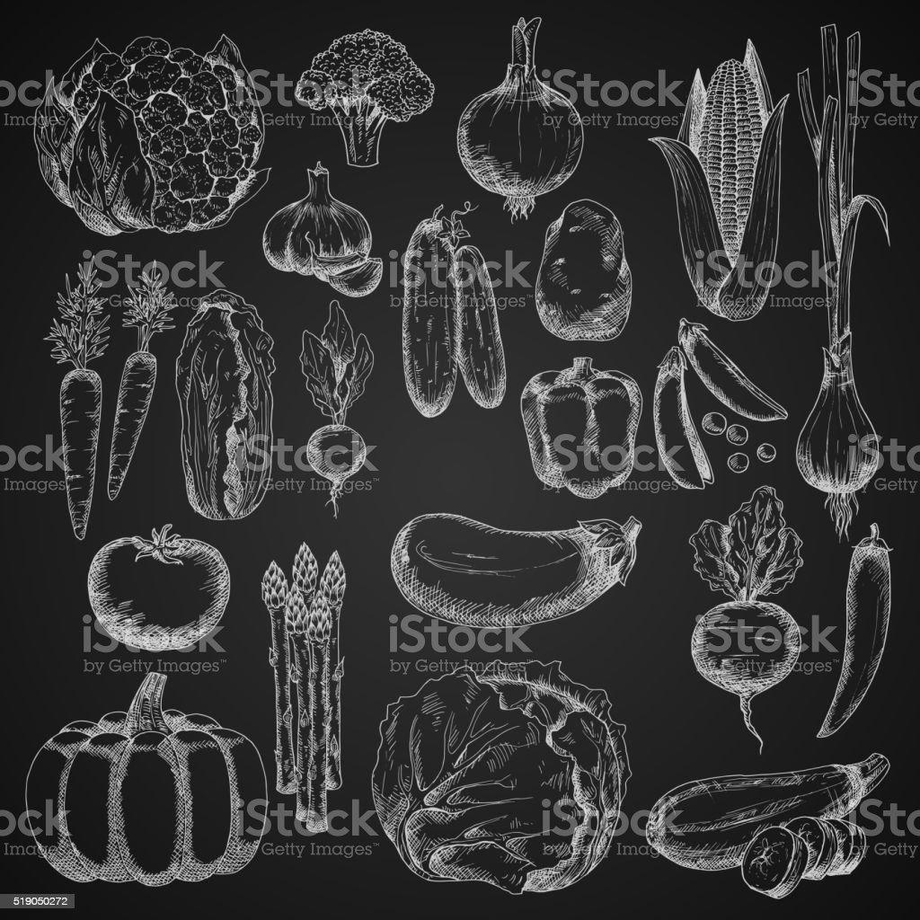 Chalk sketches of farm vegetables vector art illustration