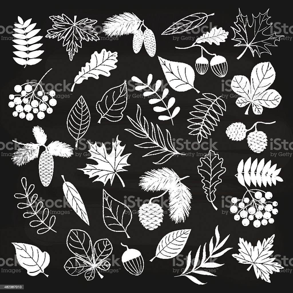Chalkboard Autumn Forest vector art illustration
