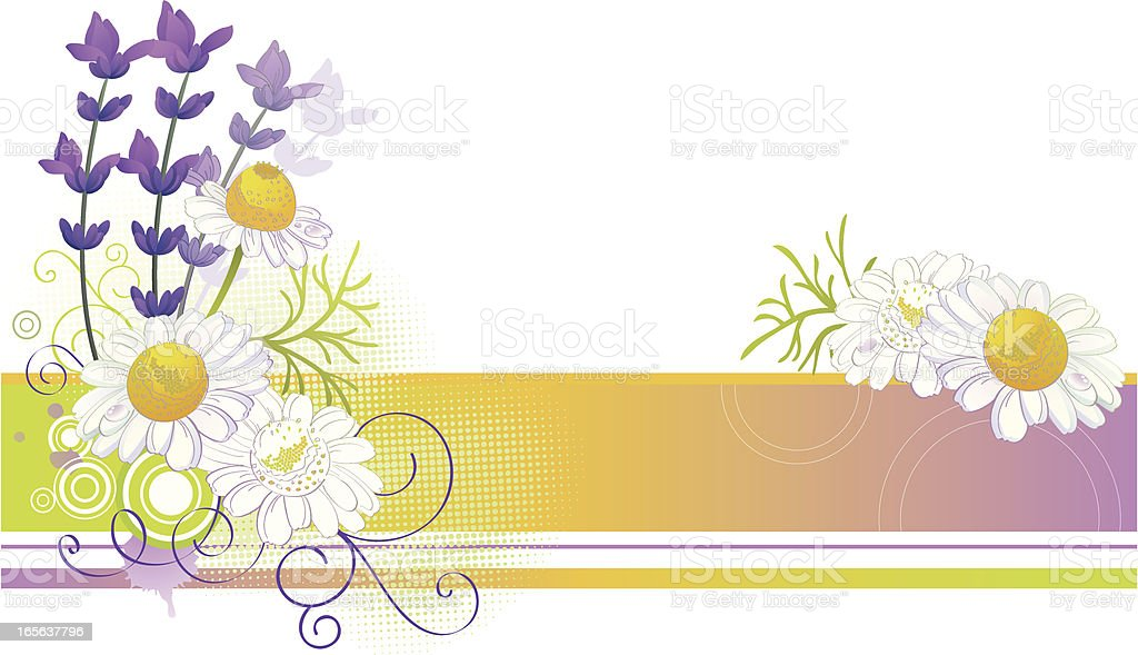 Chamomile and Lavender Background vector art illustration