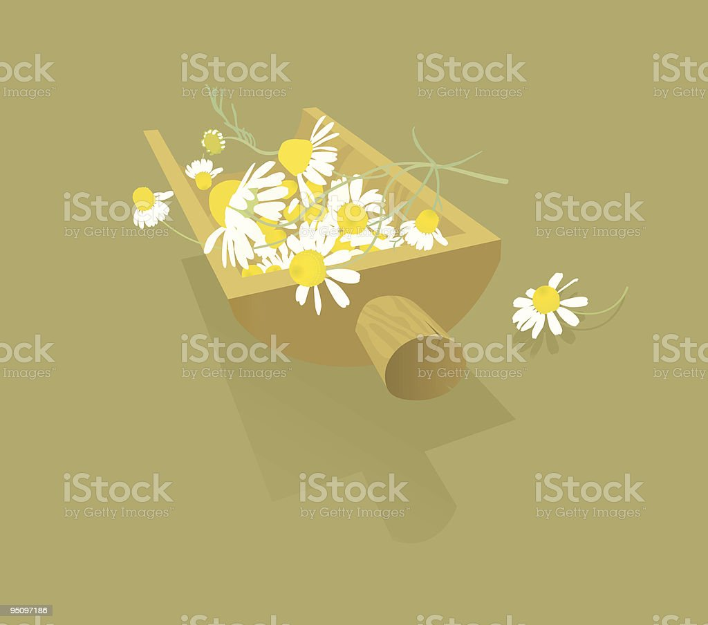 Chamomile Flowers -Design Elements royalty-free stock vector art