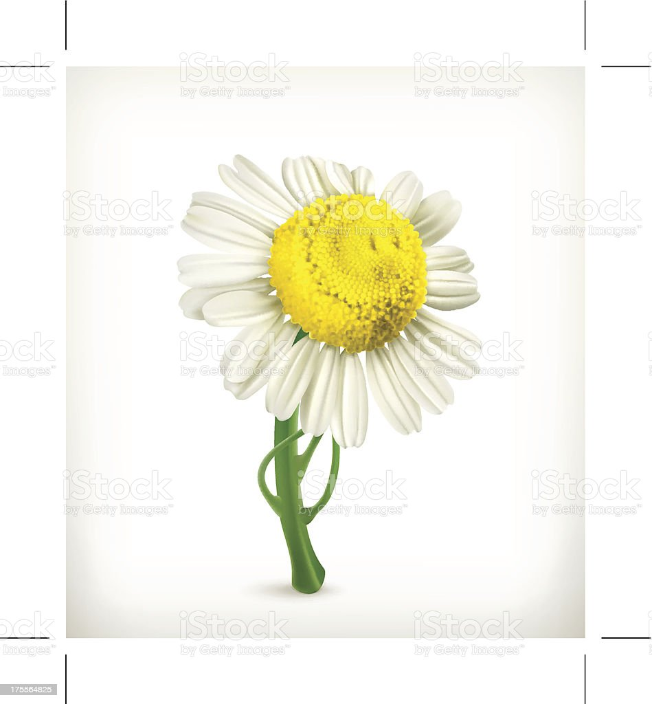 Chamomile icon royalty-free stock vector art