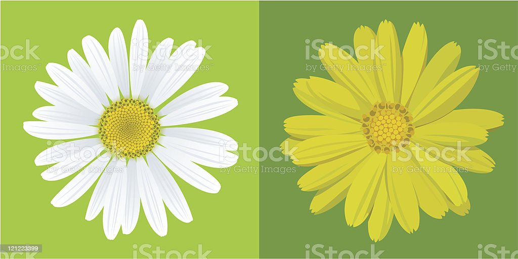 chamomile&marigold vector art illustration