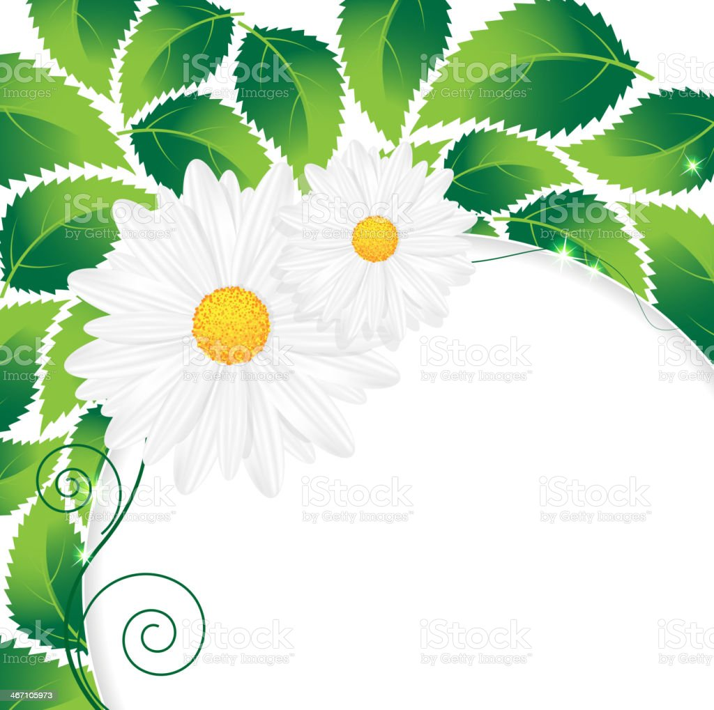 Chamomiles and leaves royalty-free stock vector art