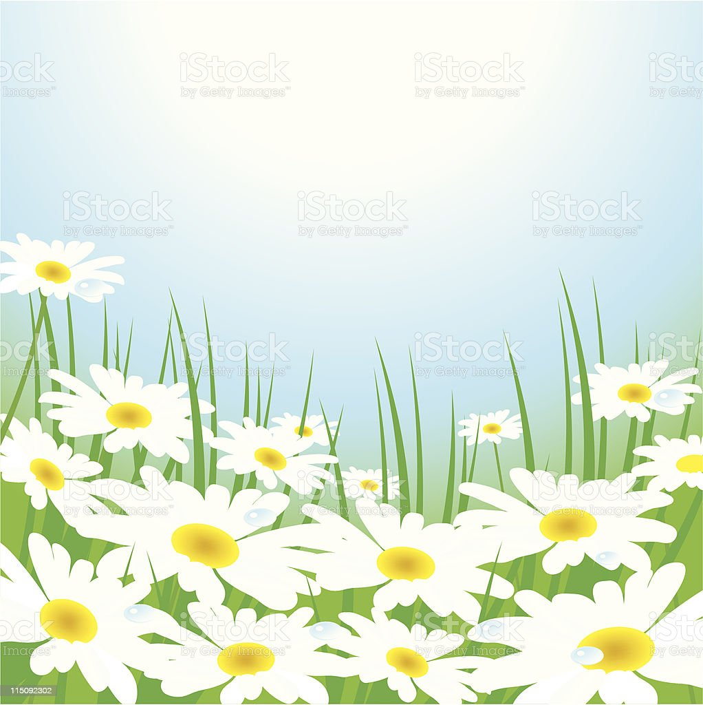 chamomiles on the meadow royalty-free stock vector art