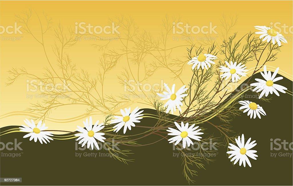 chamomiles royalty-free stock vector art