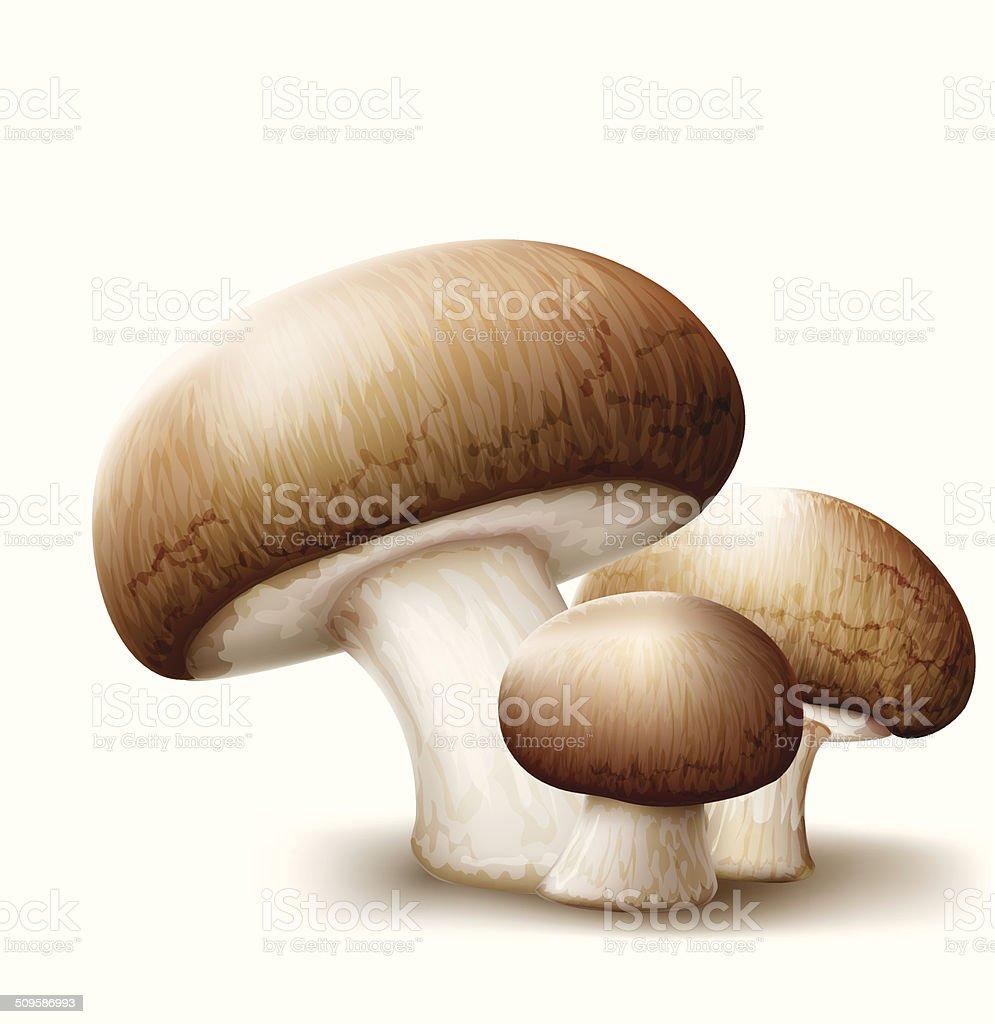 Champignons mushrooms vector art illustration