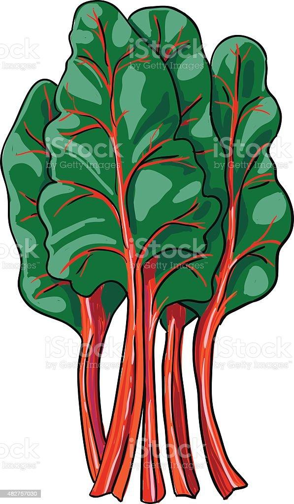 chard - hand drawn vegetable isolated vector vector art illustration