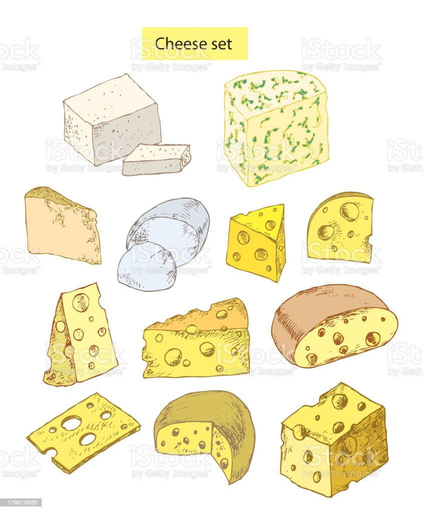 cheese set detailed illustration vector art illustration
