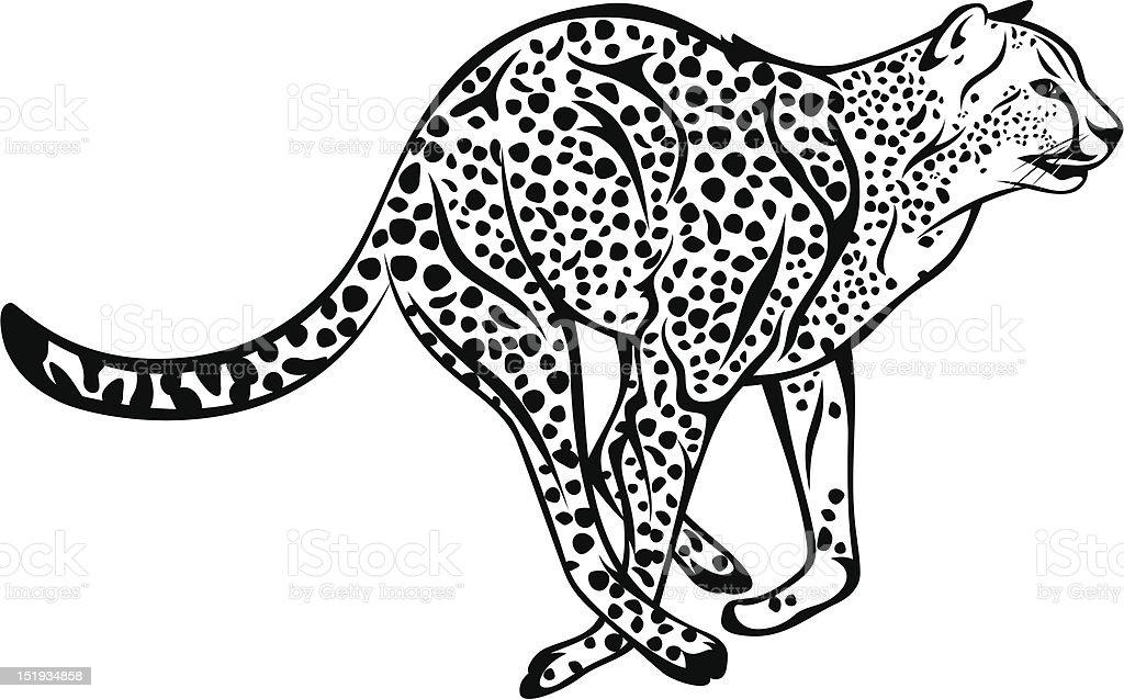 cheetah royalty-free stock vector art