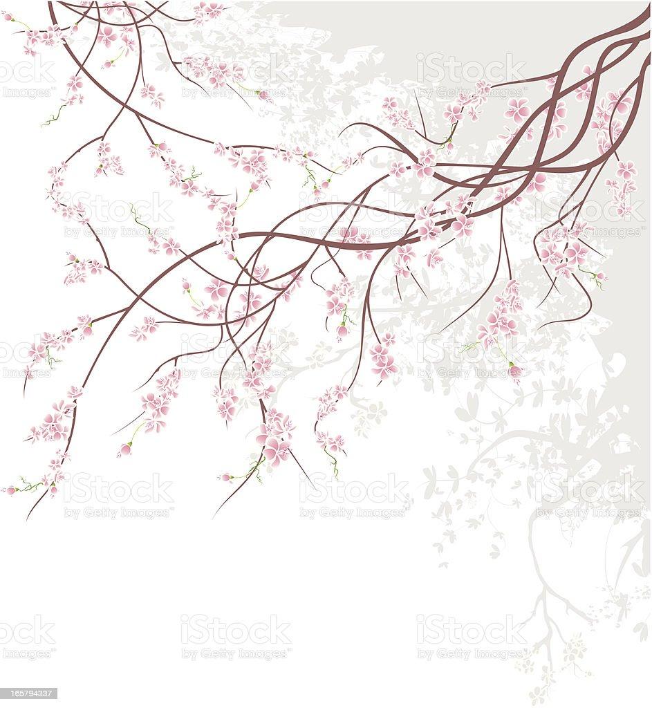 Cherry Blossom Branch vector art illustration