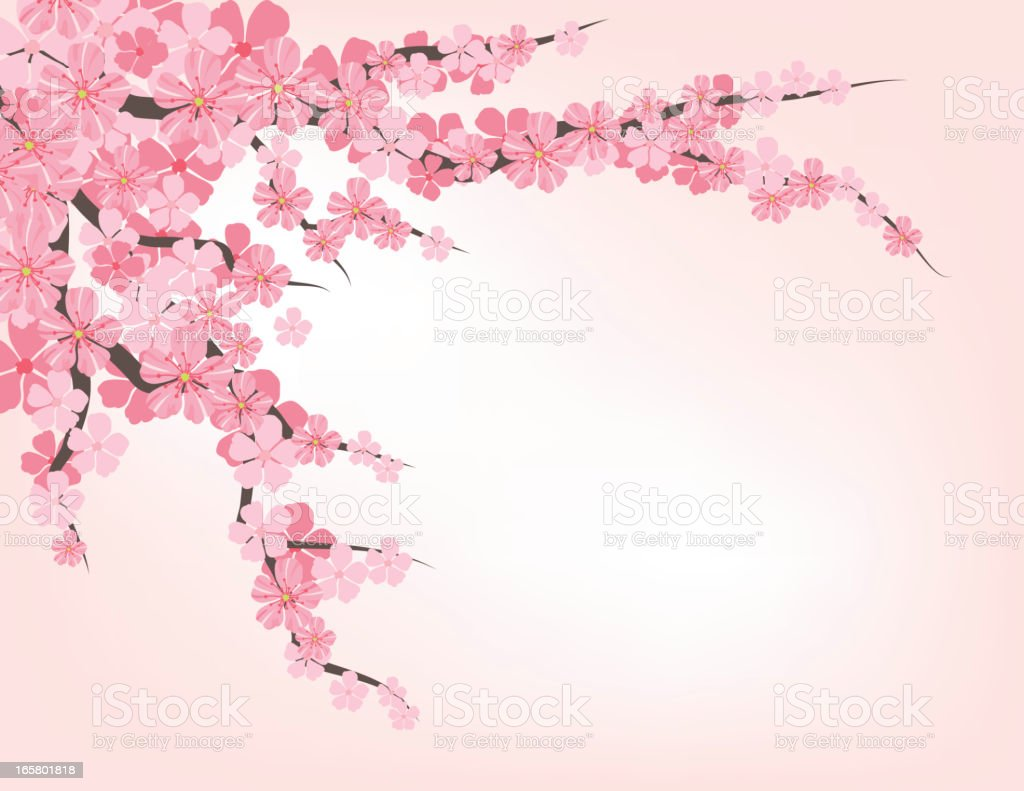 Cherry Blossom Branch vector art illustration