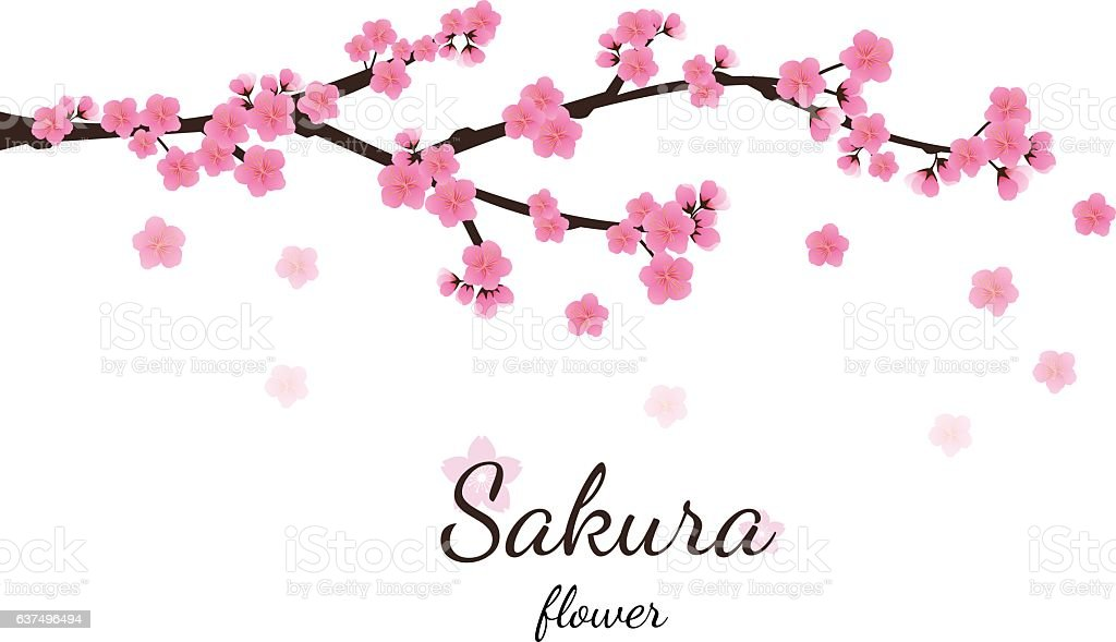 Cherry blossom flowers background. Sakura  pink flowers  backgro vector art illustration