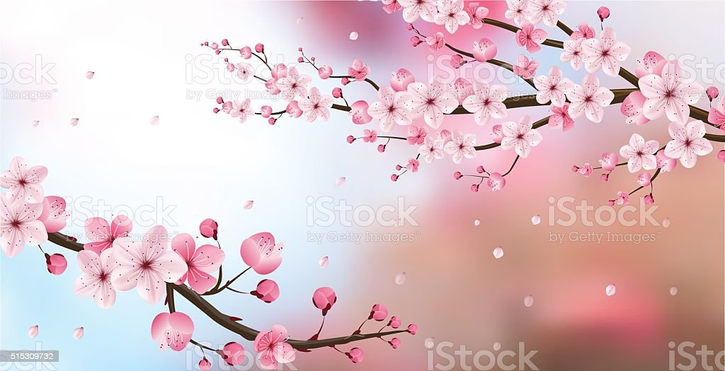 cherry blossom realistic vector vector art illustration