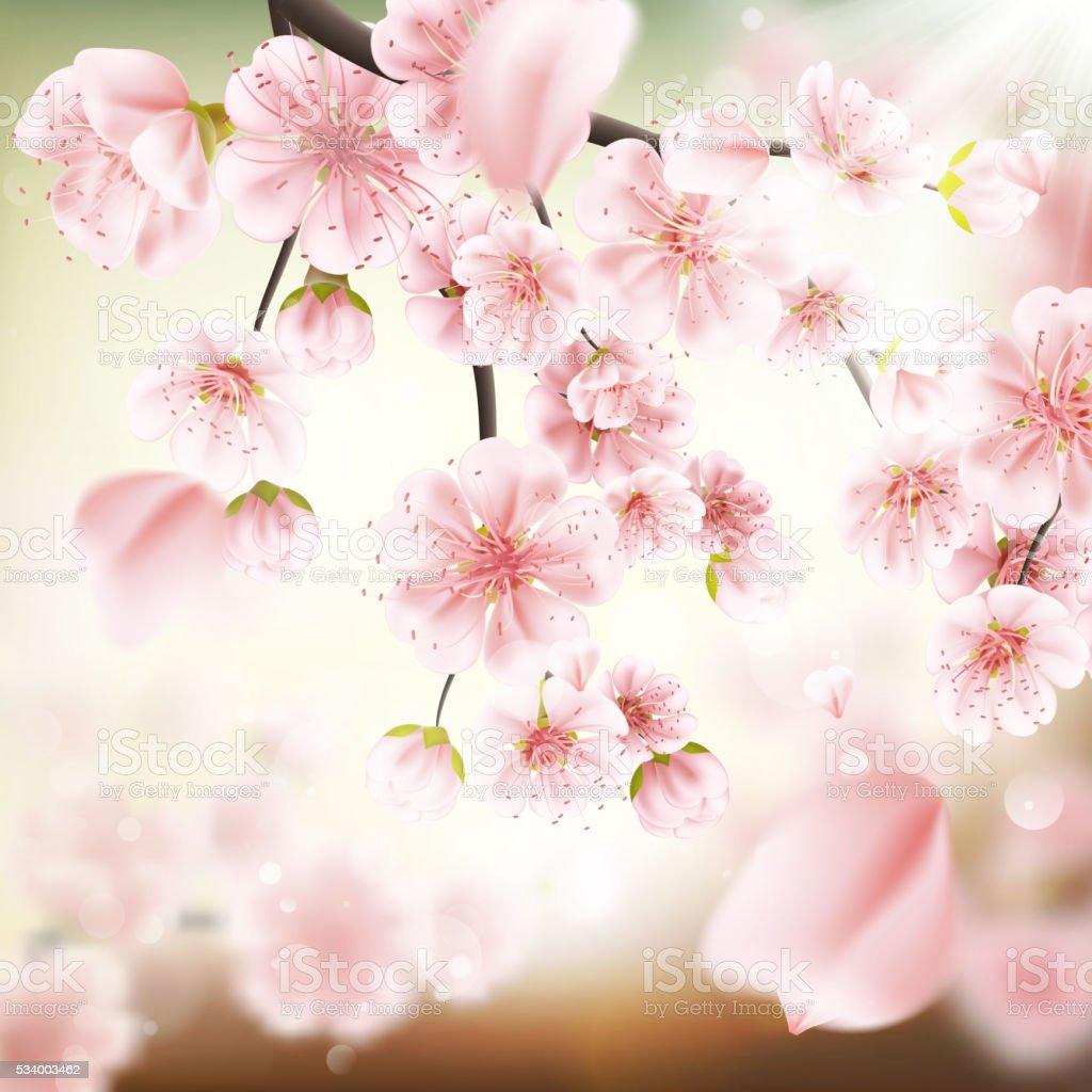Cherry blossom, sakura flowers. EPS 10 vector art illustration