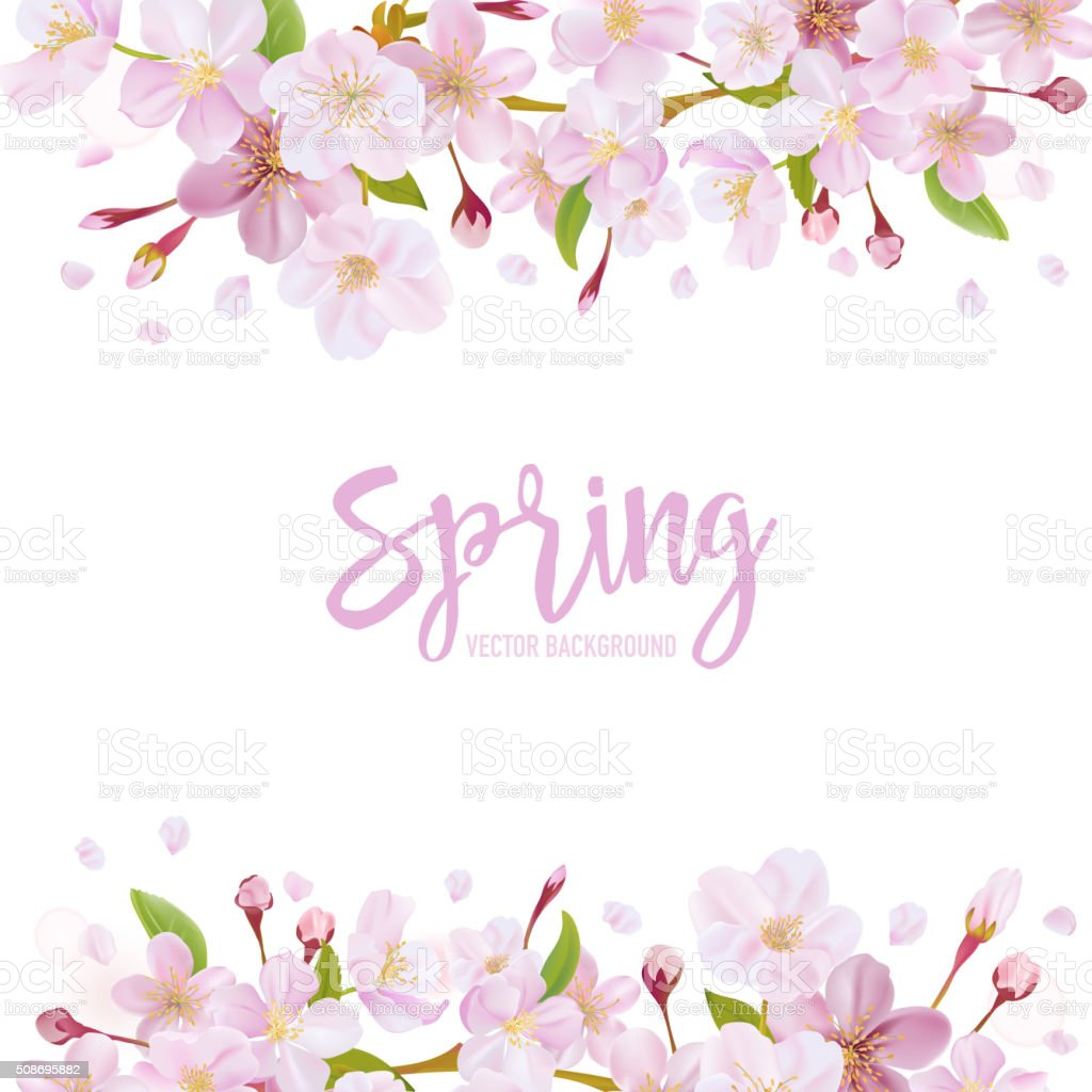 Cherry Blossom Spring Background vector art illustration