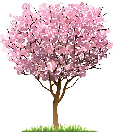 Fruit Tree Clip Art, Vector Images & Illustrations - iStock