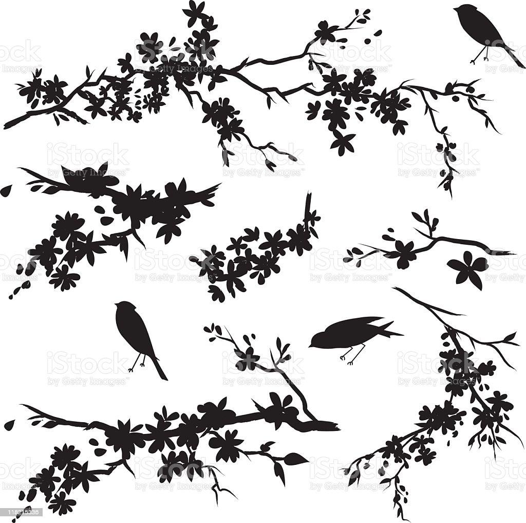 Cherry Blossoms & Birds vector art illustration
