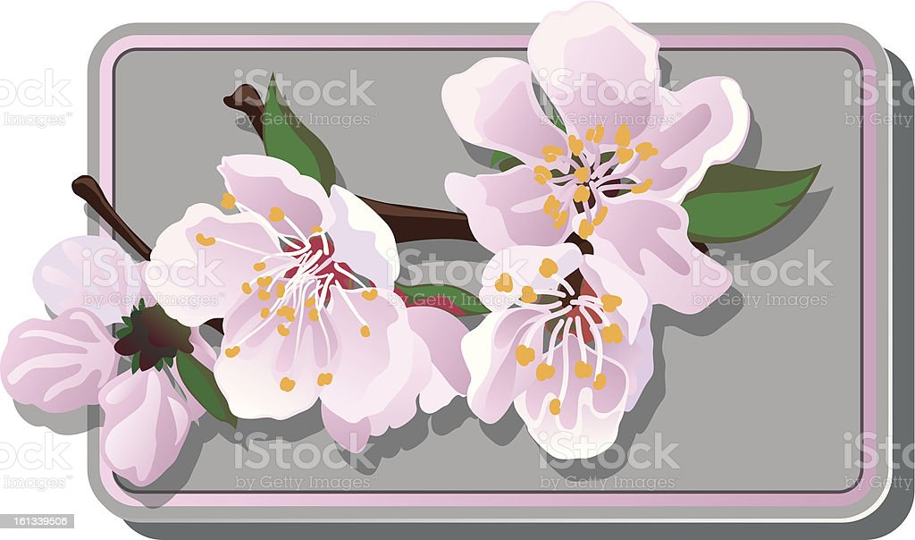 cherry blossoms card royalty-free stock vector art
