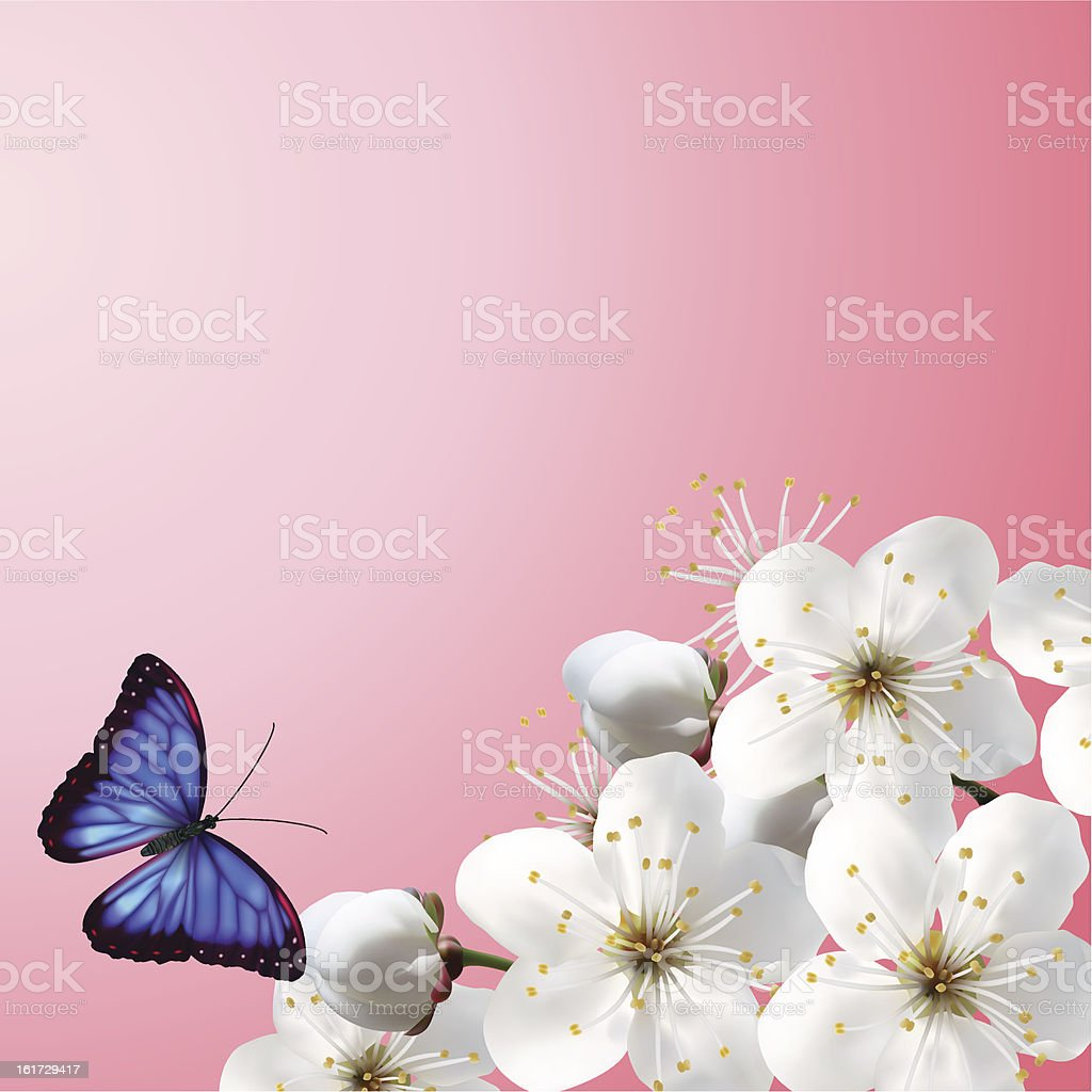 Cherry Blossoms On A Pink Background royalty-free stock vector art