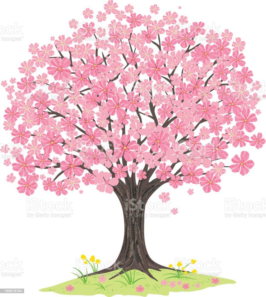Cherry Blossoms Tree vector art illustration