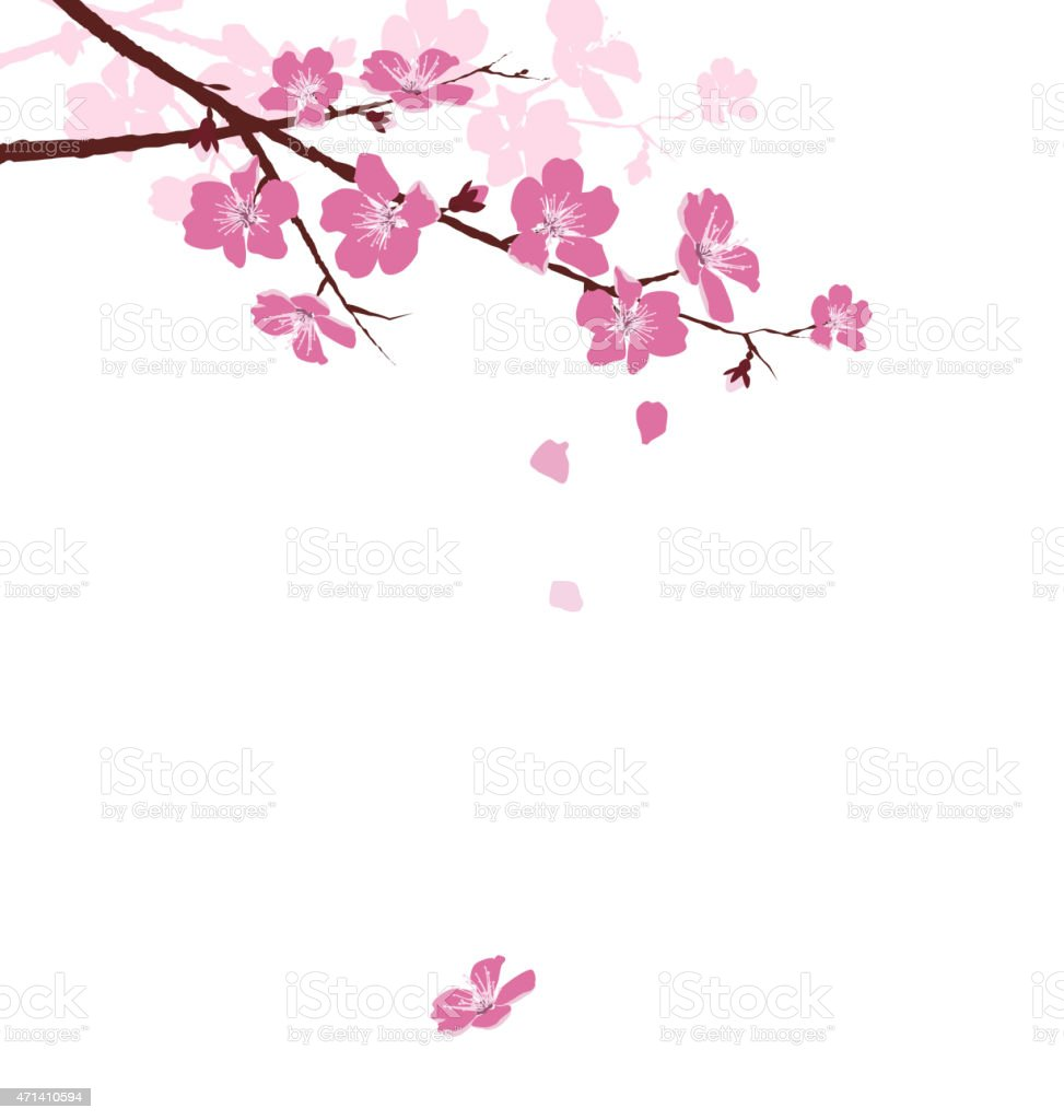 Cherry branch with flowers isolated on white vector art illustration