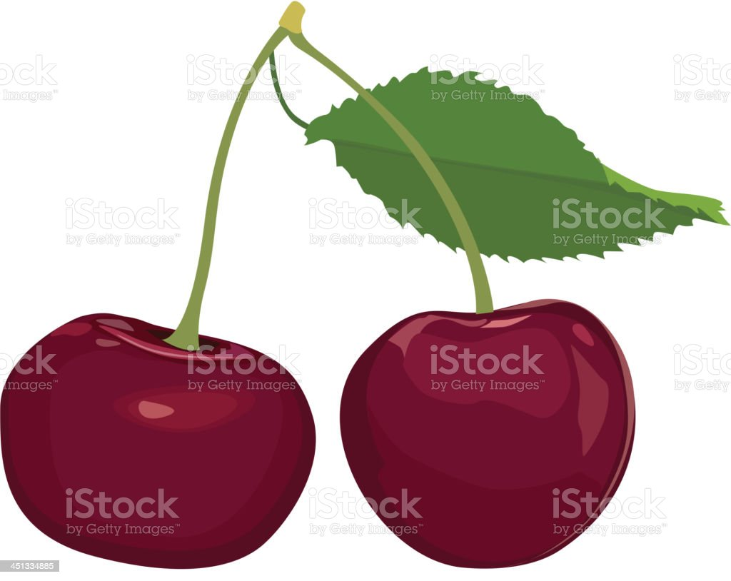 Cherry. Ripe berry. royalty-free stock vector art