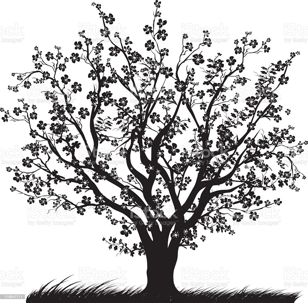 Cherry Tree in Full Bloom with Blossoms Black silhouette vector art illustration