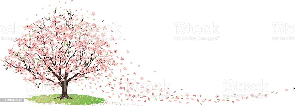 Cherry Tree in Full Bloom with Blossoms Blowing in Wind vector art illustration