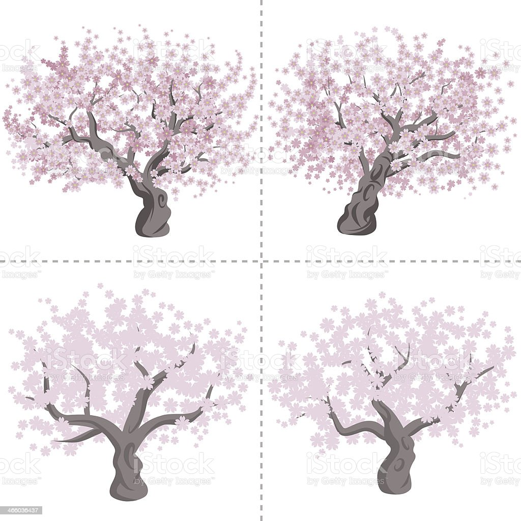 Cherry tree set vector art illustration