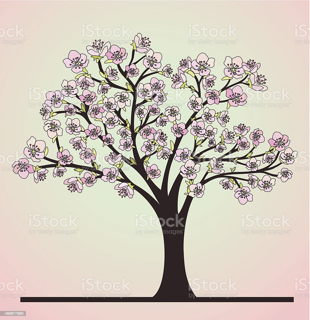 Cherry tree with blossoms vector art illustration