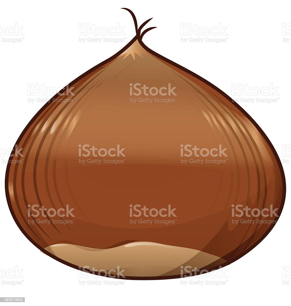 chestnut isolated on white background vector art illustration