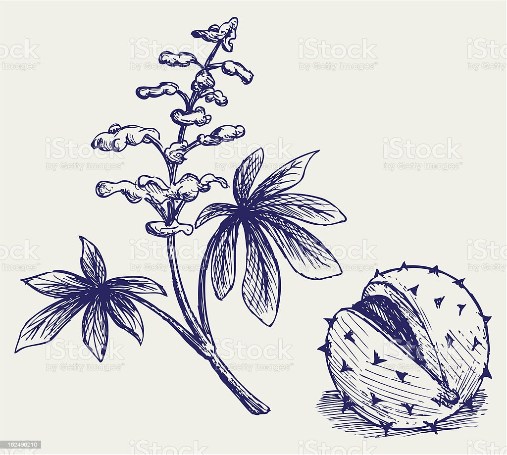Chestnuts and leaves with flowers royalty-free stock vector art