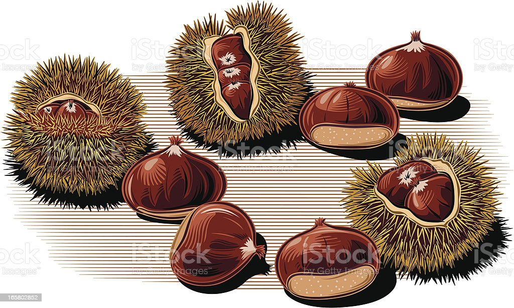 chestnuts vector art illustration