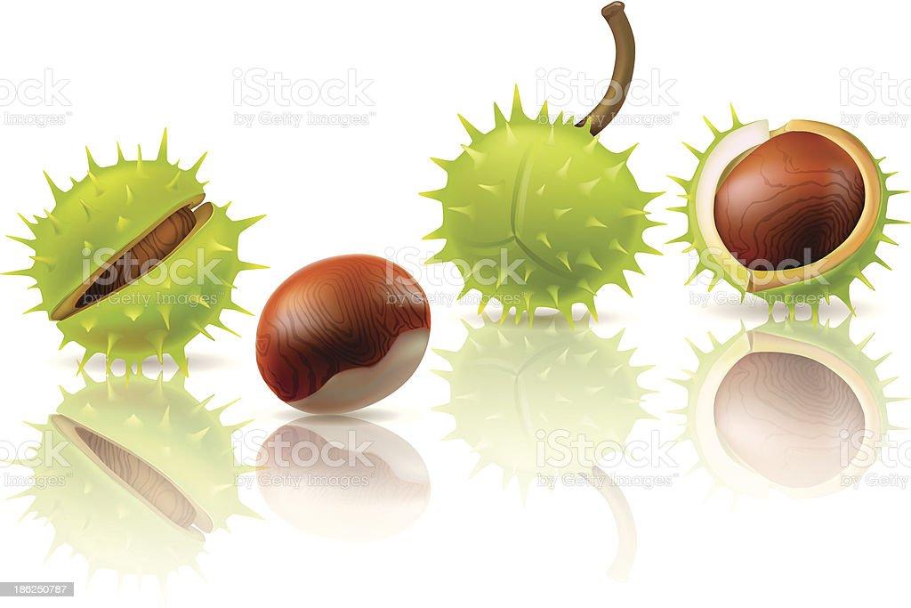 Chestnuts vector art illustration