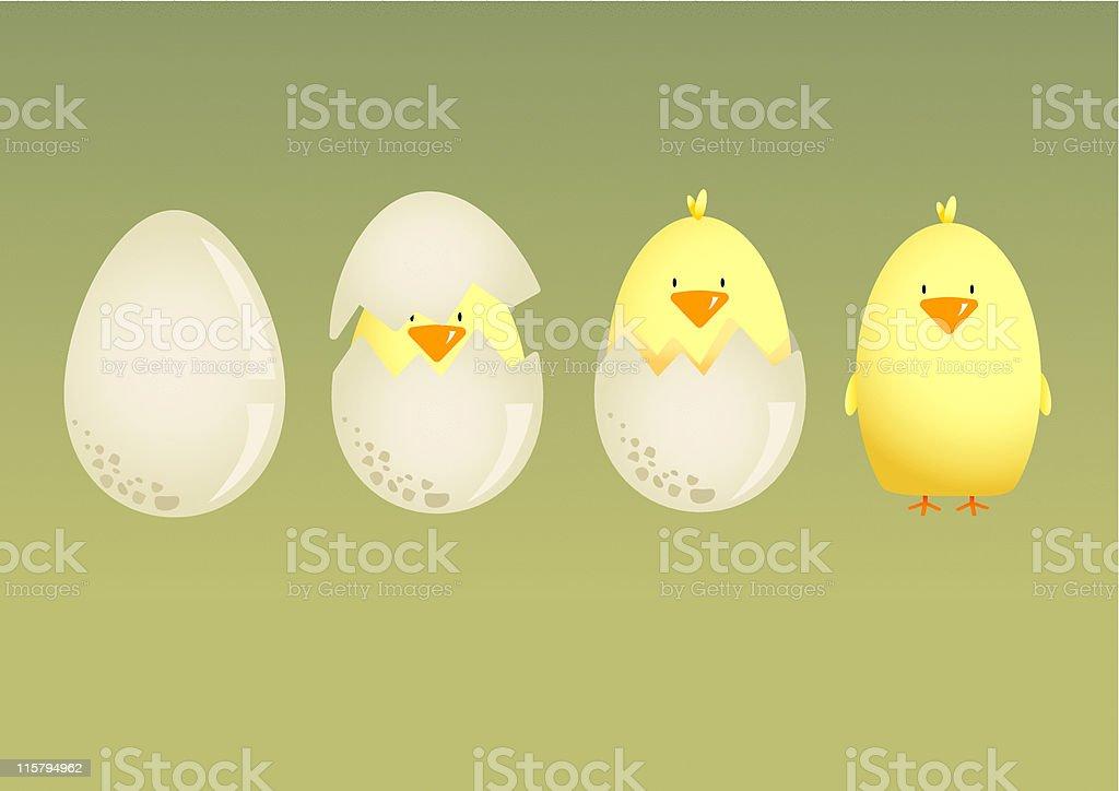 Chick Hatching vector art illustration