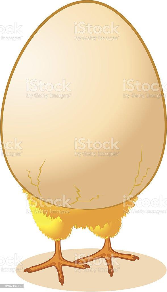 Chick in an Egg vector art illustration