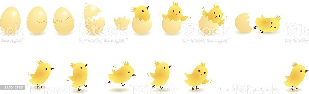 Chick vector art illustration
